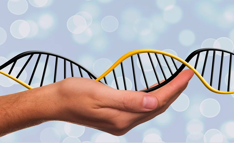 Какие гаметы образует организм с генотипом aabb?