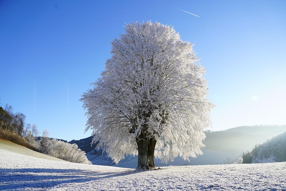 Иней. Снег
