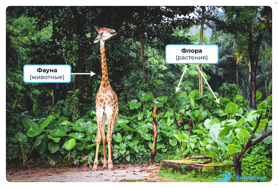 Что такое флора и фауна — определение кратко