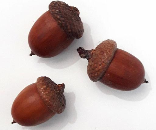 Многие орехи, семечки выглядят как конусы, в том числе сдвоенные (желуди).