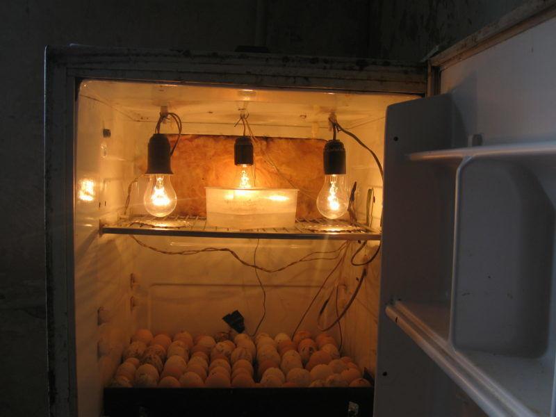 Верхняя часть самодельного инкубатора