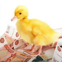 Утёнок и деньги