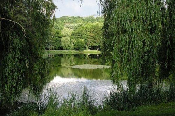 Озеро Карачун в Пуще-Водице