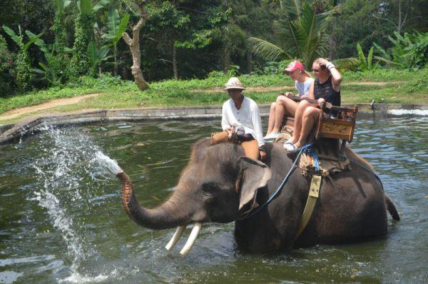 Душ от слона