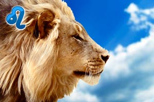 Лев и телец: совместимость знаков зодиака