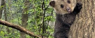 Сонник: к чему снится медвежонок