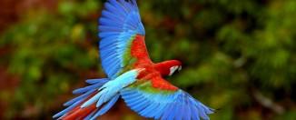 Сонник: к чему снится попугай