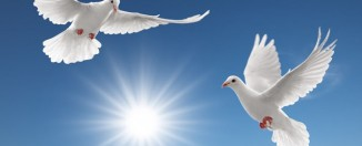 Сонник: к чему снятся голуби