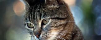 Сонник: к чему снятся кошки