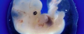Имплантация эмбриона: на какой день