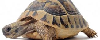 Сонник: к чему снится черепаха