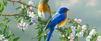 Сонник: к чему снятся птицы