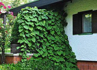 Виды растений для сада