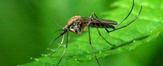 Как бороться с комарами, какие средства помогут избавиться, какие из них наиболее эффективные