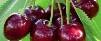 Продукты для здоровья: вишня, польза и вред