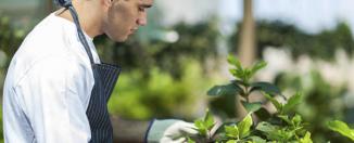 Как найти и выбрать садовника для сада