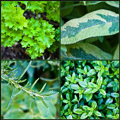 Трава шалфей: лечебные свойства и противопоказания для женщин