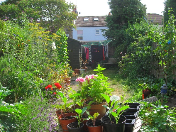 Как ферментировать листья из садовых растений для чая своими руками: рецепт