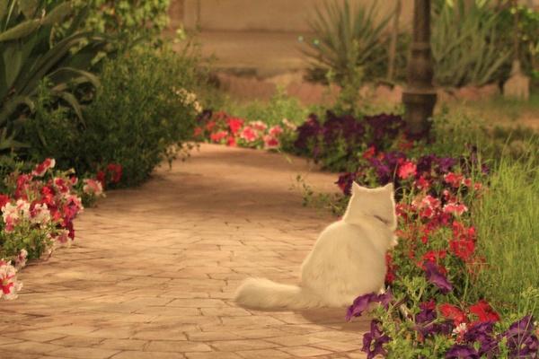Как спасти цветы от кота, если он их копает: советы для защиты растений
