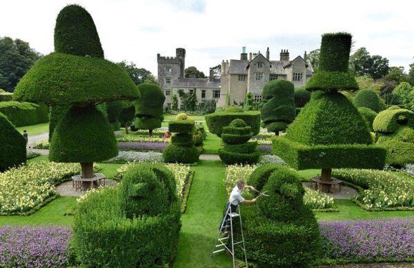 Зеленые садовые скульптуры: как называются, как сделать своими руками