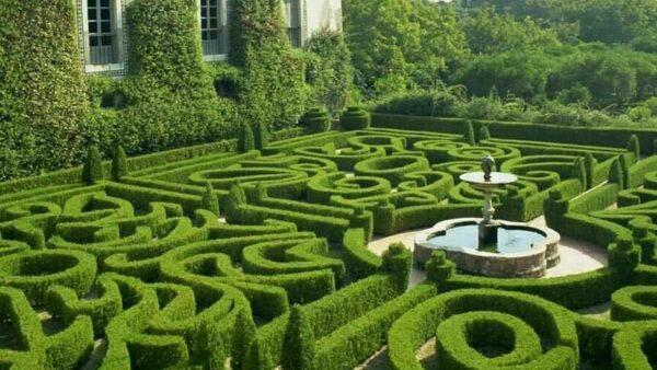 Лабиринт из кустов растений в саду: как сделать своими руками