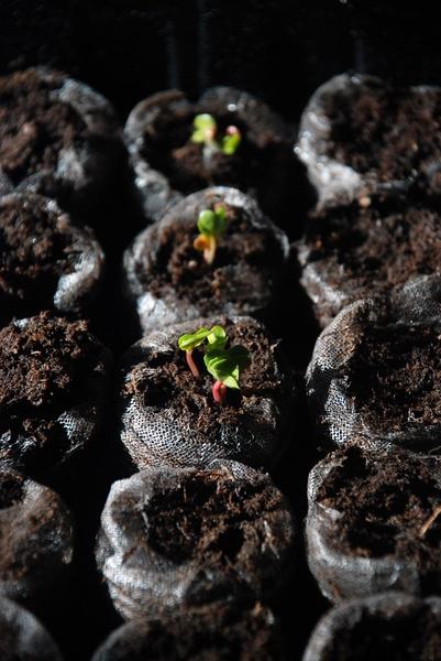 Что можно посадить в огороде в начале, середине и конце июня: подборка растений