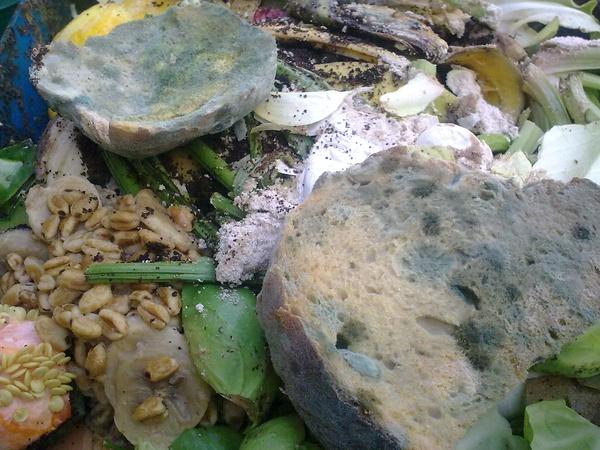 Пищевые отходы на даче: как использовать, стоит ли закапывать в грядки