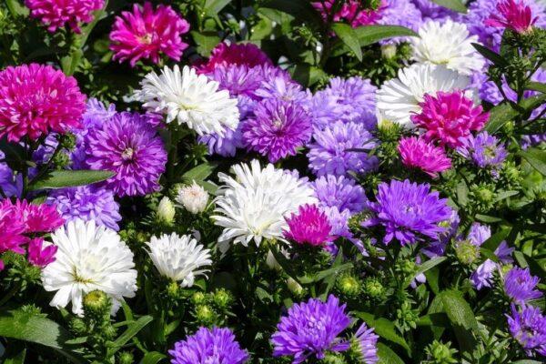 Полевые и многолетние цветы в августе: какие цветут и как называются желтые метелки