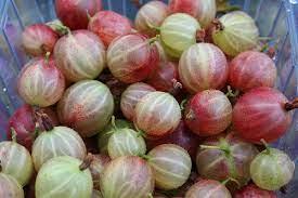 Удобрение для плодово-ягодных культур: чем подкормить смородину, крыжовник, малину